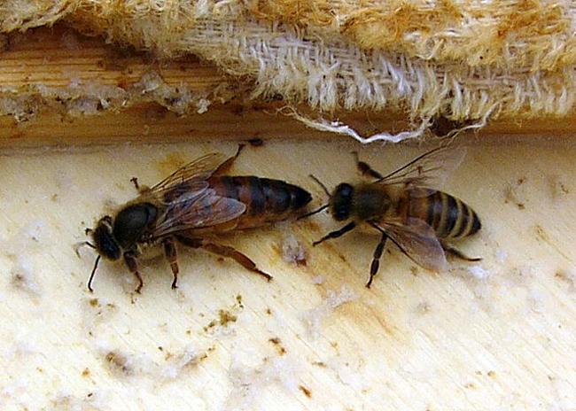 Neues Bienenvolk auf dem Gartendeck
